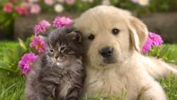 Citation et proverbe sur les animaux